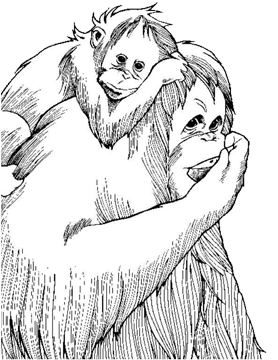 Orangutans coloring pages | Free Coloring Pages | 360x278